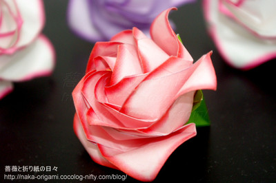 覆輪のバラ
