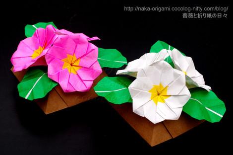 プリムラポリアンサのテーブル花