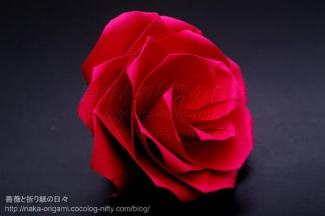 大輪の薔薇(U4-4a)