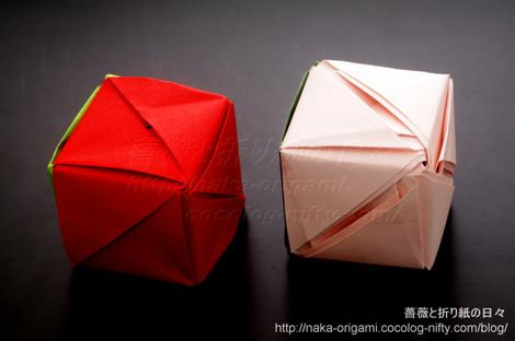 Magic Rose Cube(Ms. Valerie Vann)と八重咲きアレンジの比較
