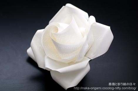 薔薇(U11-4)primary創作:中 一隆