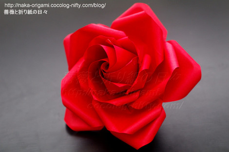 薔薇(U11-5)