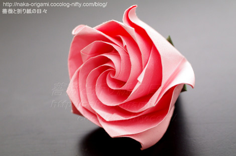 薔薇 C5