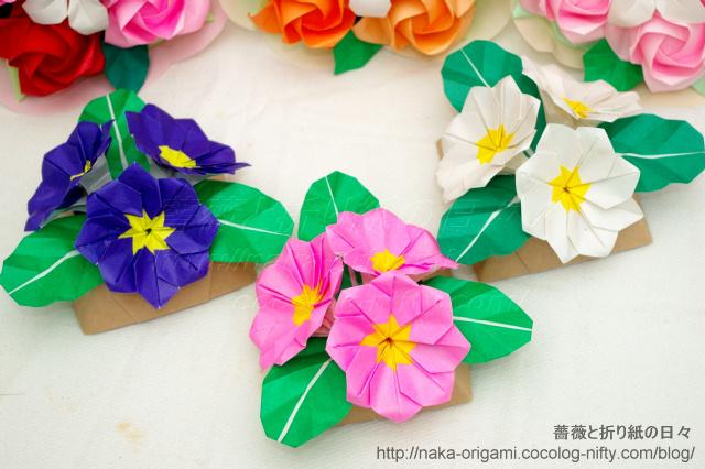 プリムラのテーブル花(1)