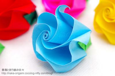 巻き込み花芯構造の新しいバラ