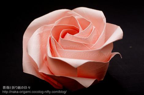 5角形から折る川崎ローズ「薔薇」(斜方格子バージョン)L2