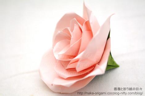 薔薇(U5-5)