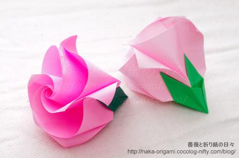 巻き込み花芯のバラ C1ローズ