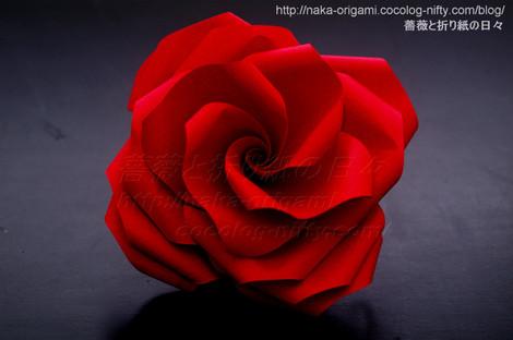 薔薇(U7w-4)