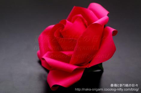 薔薇(U11-4) standard 創作:中 一隆