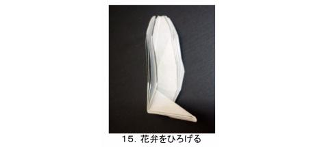 やさしいコスモス 花弁 図15
