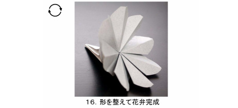 やさしいコスモス 花弁 図16